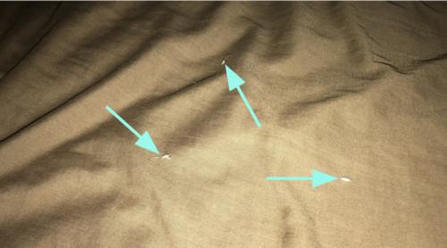 ベッドの猫の毛
